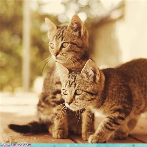 brothers kitten - 3457435136