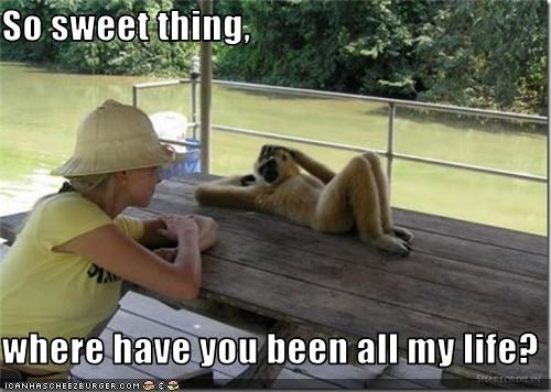all,been,caption,captioned,flirt,flirting,life,monkey,question,so,where