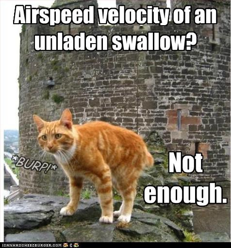 airspeed,caption,captioned,cat,eating,literalism,monty python,not enough,speed,swallow,tabby,too slow,unladen,velocity