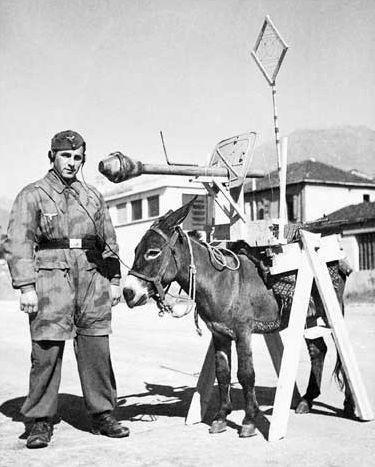 asplode donkey vintage war - 3458513152