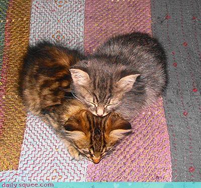 cute heart kitten - 3460387328