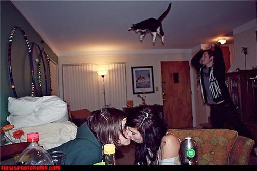 Animal Bomb Cats flying fun - 3460879104