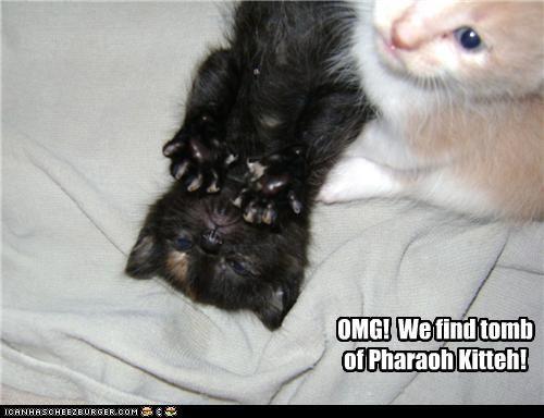 egyptian kitten look a like Pharaoh - 3461033728