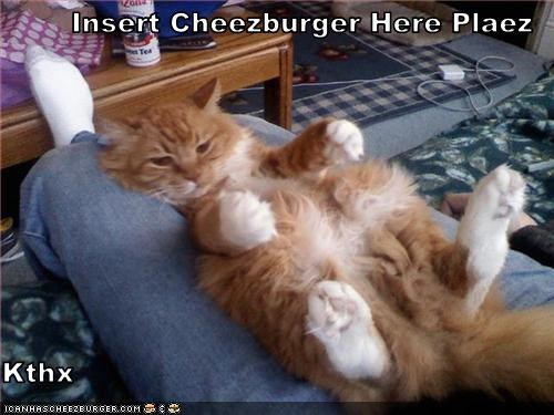 Cheezburger Image 3461485568