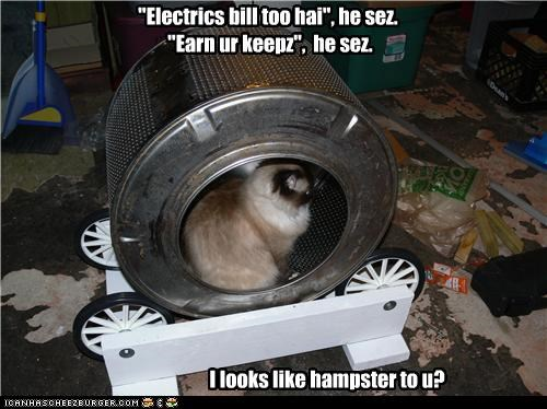basement,cat,electric bill,hamster wheel