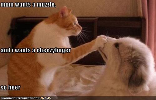 Cheezburger Image 3462718464