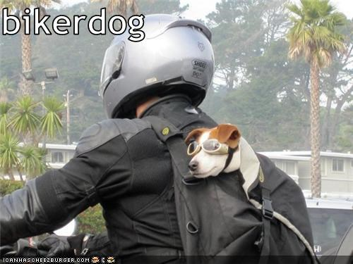 Cheezburger Image 3463053824