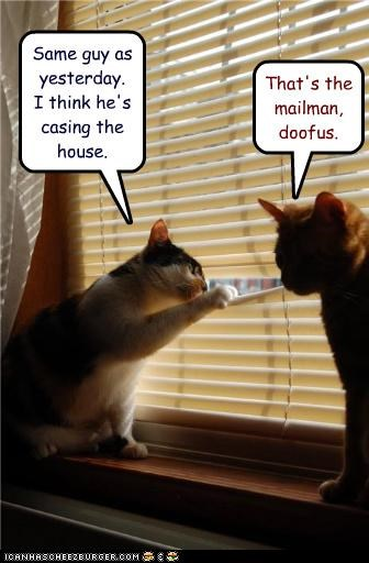 Cats mailman spying stupid window - 3465897216