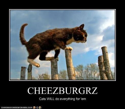 Cheezburger Image 3466129152