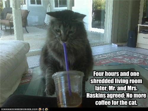 bad cat,coffee,destruction,mess