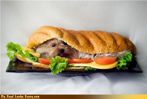 burgers and sandwiches dogs hairy puppy sandwich sub - 3466637056