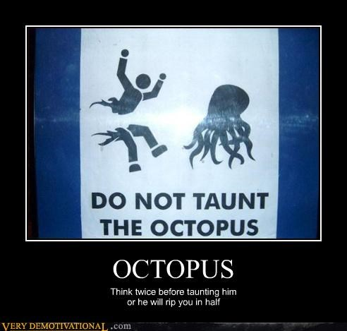 animals bullying octopus signs teasing Terrifying violence - 3466723584