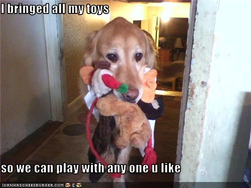 golden retriever,play,stuffed toy