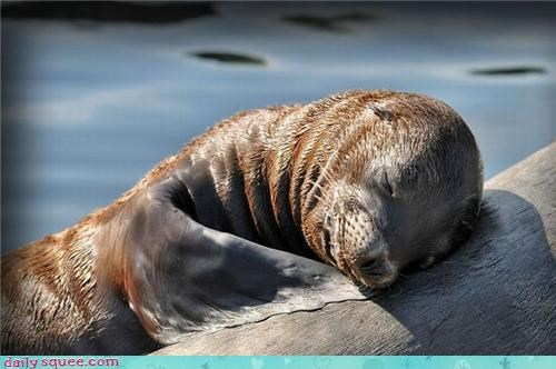 cute,hugs,seal