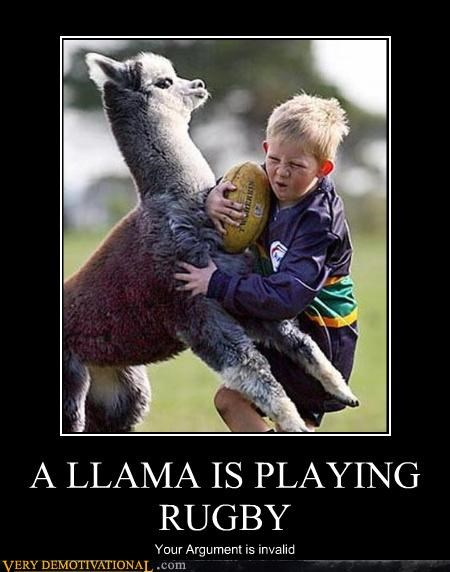 argument invalid llama kid rugby classic - 3467448320