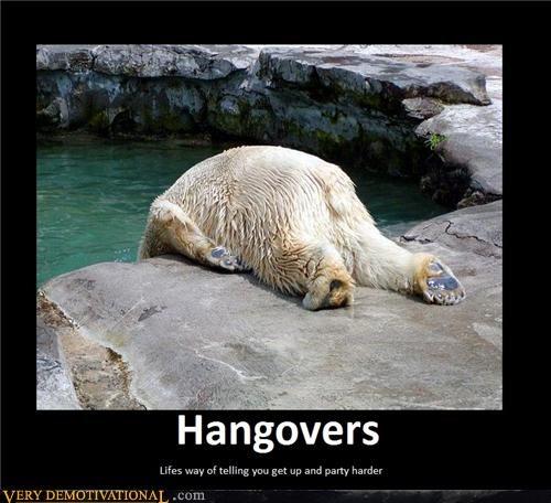 life,polar bear,hangover