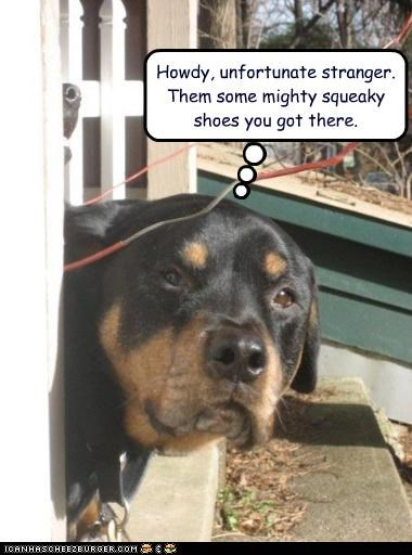 porch,rottweiler,shoes