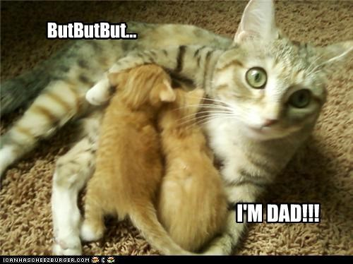 cute,dadcat,kitten,momcat