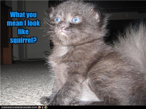 kitten look a like squirrel - 3469274624