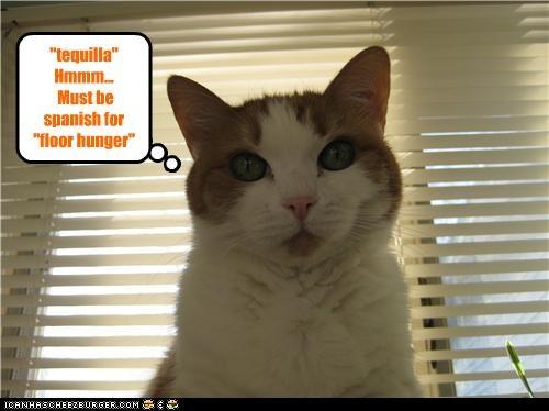 Cheezburger Image 3469301248