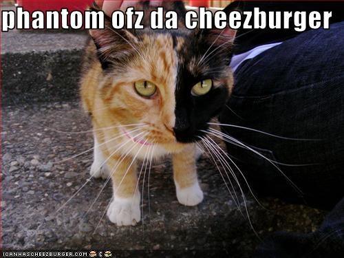 Cheezburger Image 3469647616