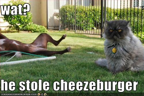 Cheezburger Image 3470784512