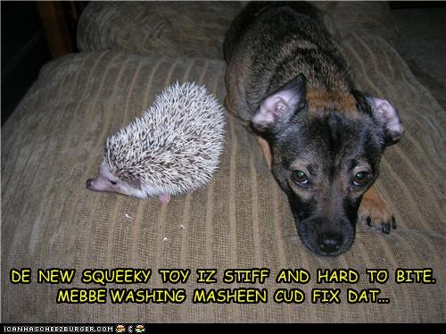 hedgehog,mixed breed,squeaky toy,washing machine