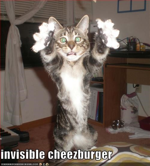 Cheezburger Image 3472387072