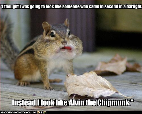 """""""I thought I was going to look like someone who came in second in a barfight. Instead I look like Alvin the Chipmunk."""""""