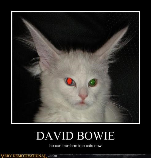 DAVID BOWIE he can tranform into cats now