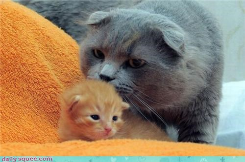 cat kitten mom - 3474284032