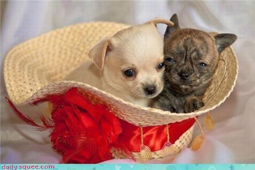 adorable cute puppy - 3474286080