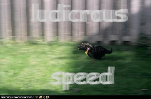 ludicrous speed ludicrous speed ludicrous speed ludicrous speed ludicrous speed