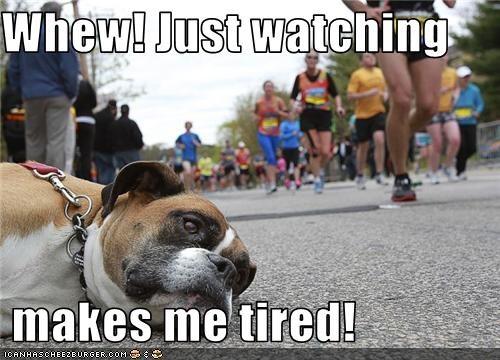 bulldog mix outside race street tired - 3475029760