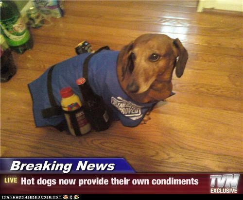 dachshund,drink holder,mustard,news