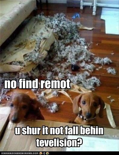 couch dachshund mess remote - 3476154112
