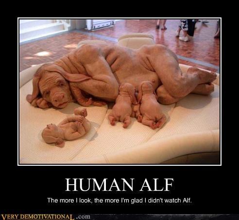 Alf eww human - 3477212672