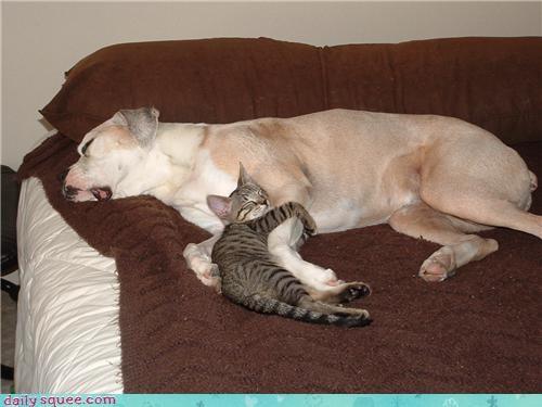 Day of Rest kitten - 3477579776