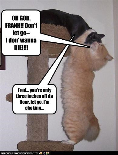 scared scratching posts - 3478127104