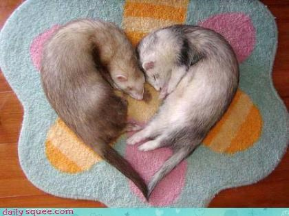ferret,heart,sweet