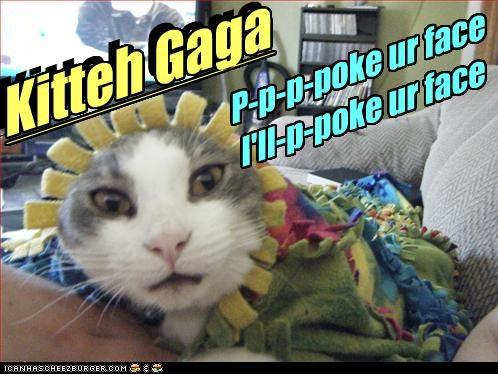 caption captioned cat costume dressed up gaga lady gaga lyrics misintrepretation poker face - 3479484416