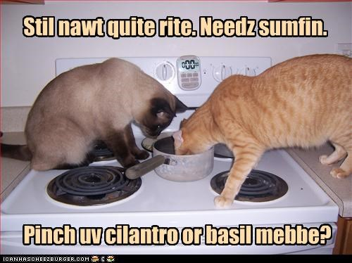 Stil nawt quite rite. Needz sumfin. Pinch uv cilantro or basil mebbe?