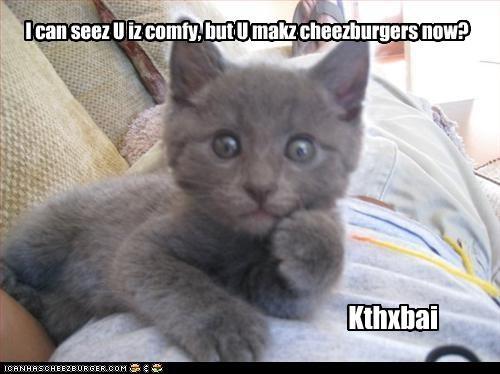 Cheezburger Image 3480129280