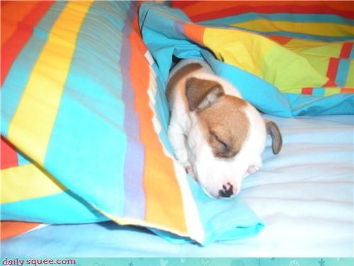 colorful Day of Rest puppy