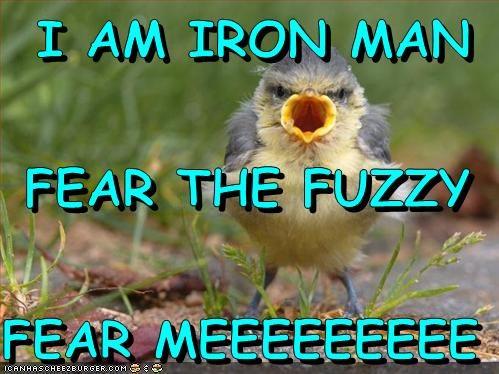 I Am Iron Man Fear The Fuzzy Fear Meeeeeeeee Cheezburger Funny
