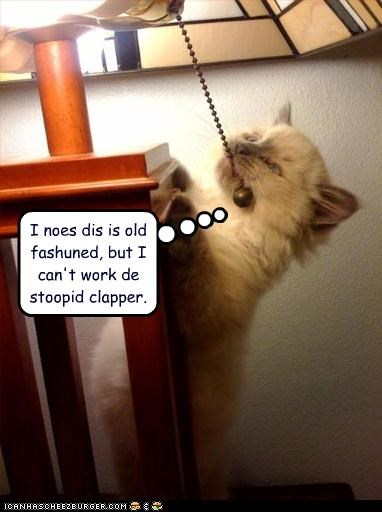 confused,kitten,lamp