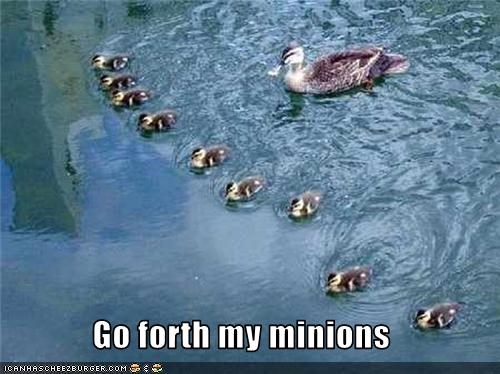 cute,duckling,lolbirds,lolducks,minions,world domination