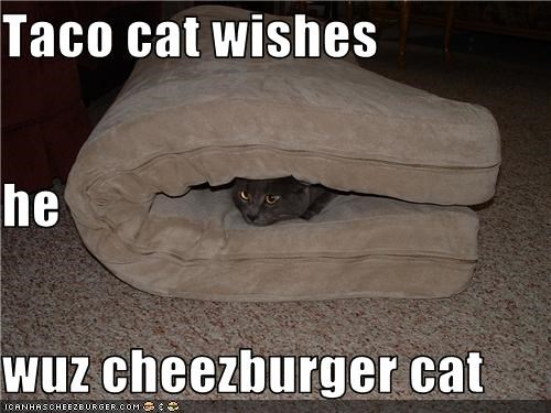 Cheezburger Image 3484140032