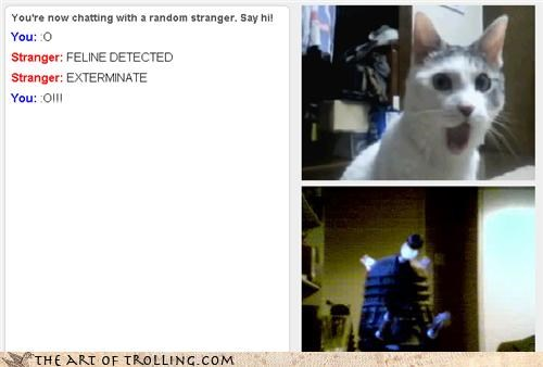 Chat Roulette,dalek,doctor who,Exterminate,omg cat