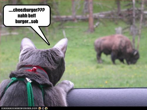 Cheezburger Image 3486254080